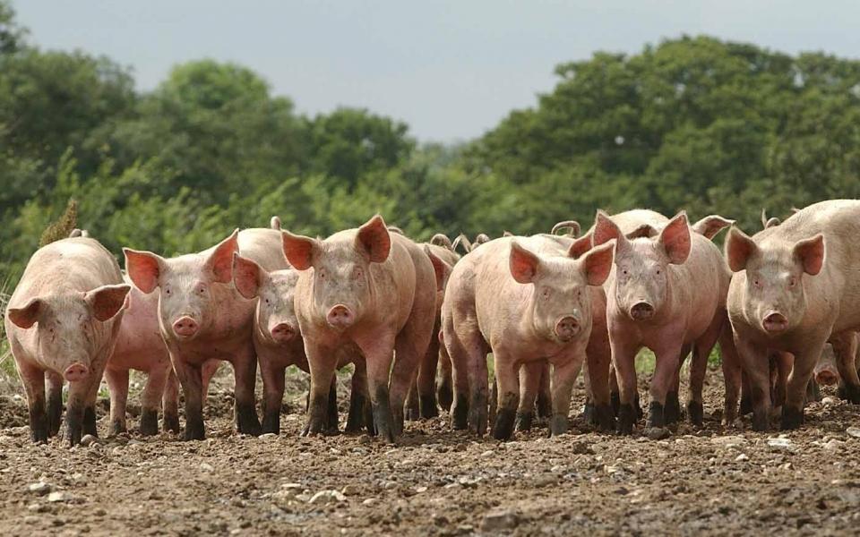 «РСХБ-Страхование» застраховало поголовье свиней на 1,2 млрд р.СК «РСХБ-Страхование» заключила договор страхования животных с группой компаний «Талина».Страховой защитой обеспечено поголовье свиней. Страховая сумма составляет 1,2 млрд р., сообщает страховщик.Группа компаний «Талина» является агропромышленным холдингом полного цикла производства. Холдинг объединяет предприятия по растениеводству, изготовлению комбикормов, индустриальному разведению и откорму свиней, производству и реализации мясоколбасной продукции.  http://www.asn-news.ru/news/72121#ixzz67mreociE