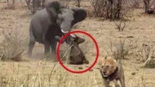 """Животные """"страхуют"""" друг друга"""
